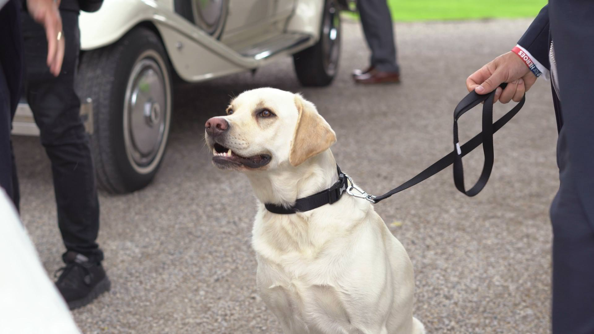 rocco the Labrador dog waits in his bow tie outside Mitton Hall