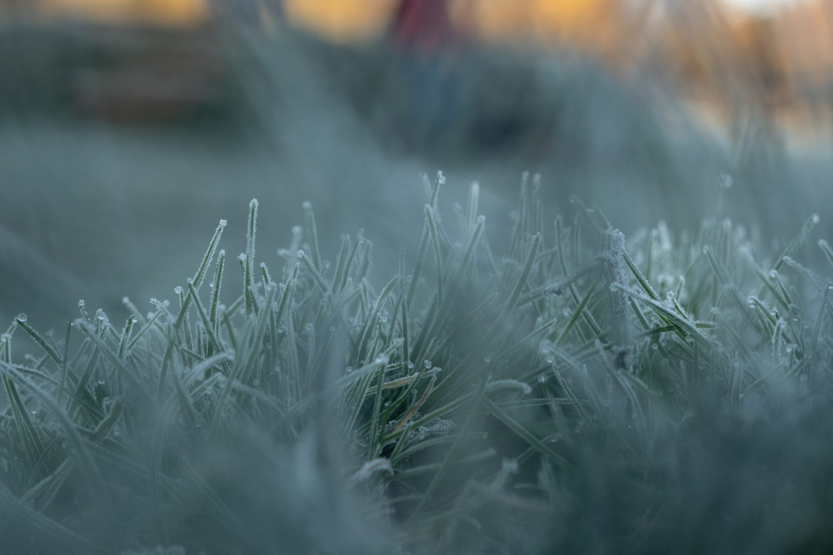 a close up of thick frost on grass during a family walk in cheshire