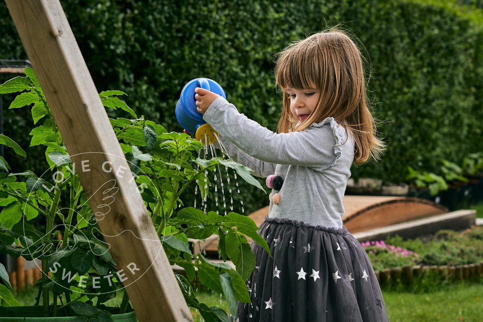 toddler waters plants in family garden in Burscough