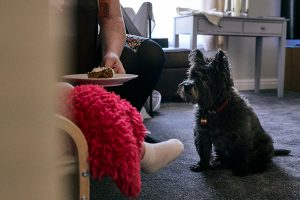 dog watches little girl eat christening cake