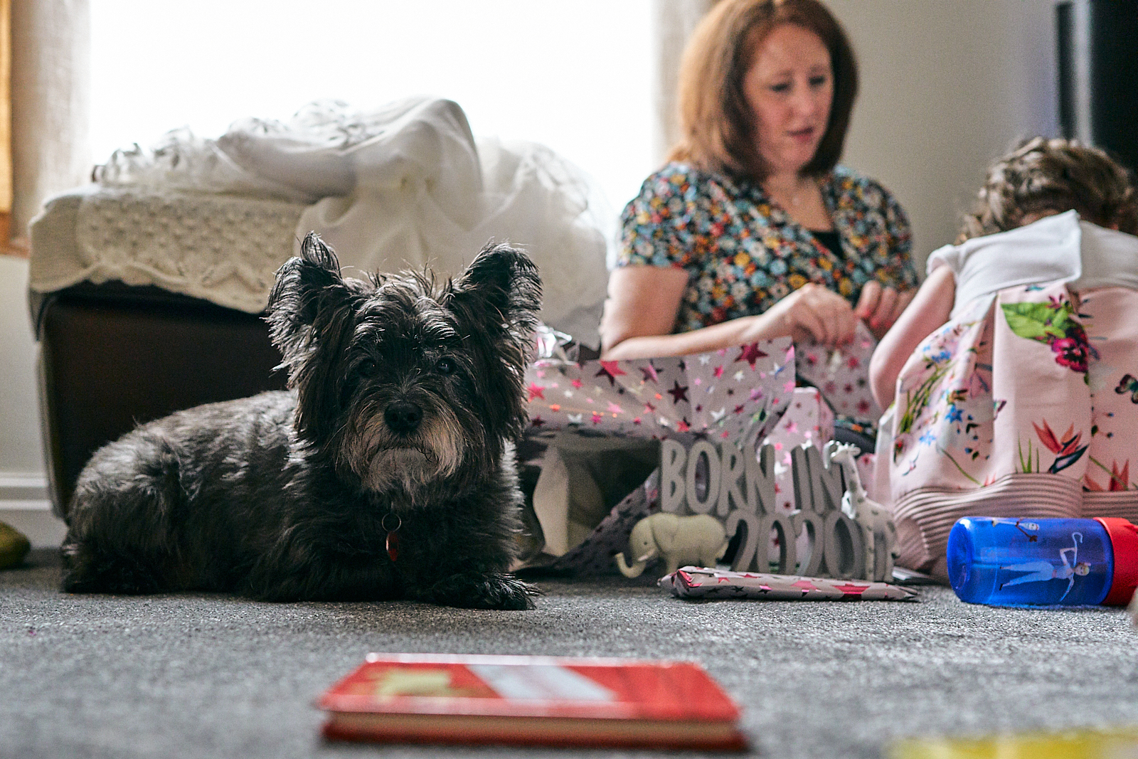 scotty dog stares at photographer amidst family chaos